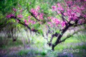 Beijing, Spring 北京植物園 春