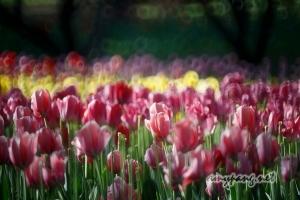 Beijing Spring #1