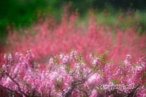 Beijing Spring #7