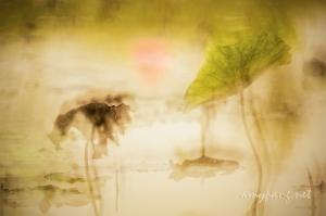 <映荷影 光 細語> <Lotus Rendezvous Light Whispering>
