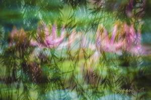 <映荷影 色 垂楊舞><Lotus Rendezvous Color Dancing Willow>