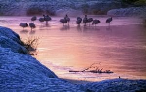 Hokkaido Cranes 04